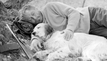 Как сложилась судьба главного героя фильма «Белый Бим – черное ухо», пса по кличке Стив, после сьемок фильма