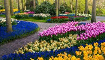 Самый красивый парк тюльпанов Кёкенхоф в мире без единого посетителя