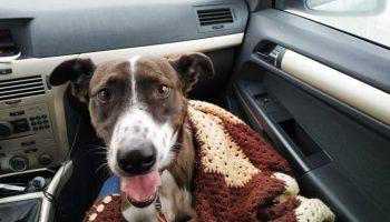 Бездомный пес ловил каждое движение Наташи, всячески старалась ей понравиться,чтобы она его забрала из приюта