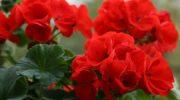 Уникальный цветок, который должен быть в каждом доме!