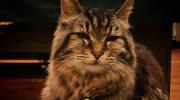 Удивительная история про кота долгожителя, который прожил 182 года