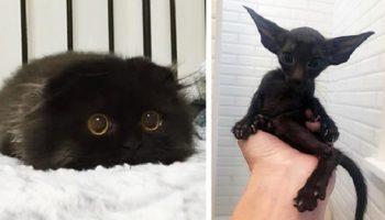 20 милых фактов, почему не надо опасаться встречи с черной кошкой