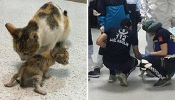 Бездомная кошка принесла своего больного котенка прямиком в больницу