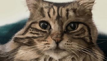 Каждое утро кошка приносит хозяйке тапочки, благодаря ее этим за свое спасение