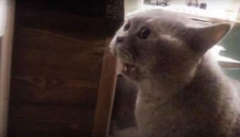 Кот Яков так хотел выйти, что четко произнес фразу «Открой мне»человеческим голосом