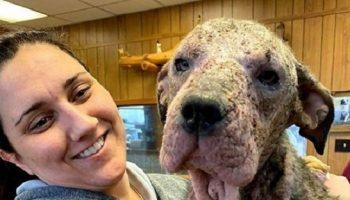Женщина приютила и вылечила больную собаку, которую ждал печальный конец.