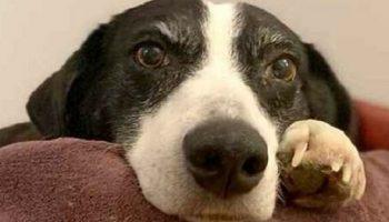 У «Самой одинокой собаки» Великобритании, прожившей в приюте почти всю жизнь, наконец-то появился хозяин