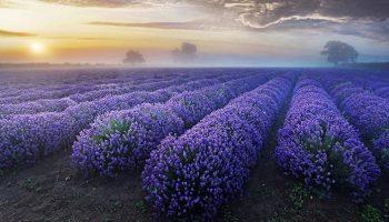 Удивительная подборка фотографий невероятно красивых чудес природы