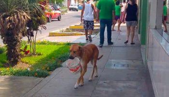 Страдающая от жажды собака додумалась, как попросить воды у прохожих
