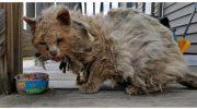 Добрые люди спасли бездомного Фрисби из ловушки