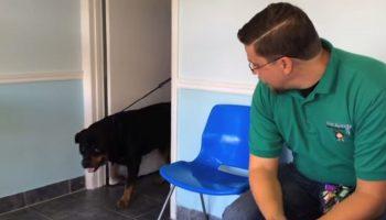 Узнает ли пес хозяина после 8-ми лет разлуки (12 млн. просмотров)
