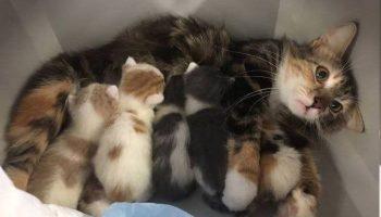 Животные, которые пожалели о том, что познали радость материнства