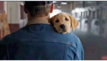 Гиперпозитивное видео для всех, кто любит домашних животных! Про настоящую дружбу и любовь