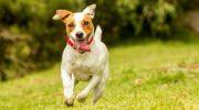 Какая порода собаки похожа на Ваш знак зодиака больше всего
