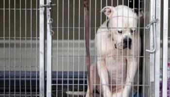 Пса сдали в приют и он, буквально убит горем