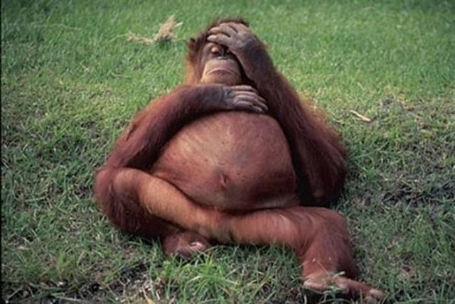 20 самых милых фотографий беременных животных