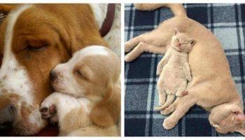 Трогательные фото мамочек животных с их малышами