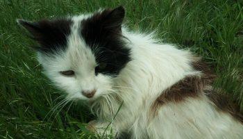 Одинокая кошка Маня, 3 года преданно ждала свою покойную хозяйку