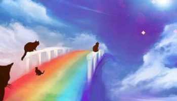Посвящаю моей любимой кошечке Мишель и всем, ушедшим на радугу…