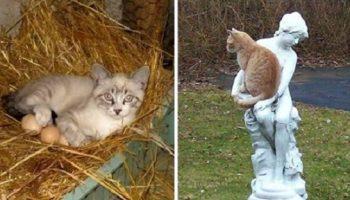 20 мест, в которых уж точно кота не должно быть, а он есть