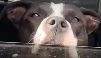 В диких местах и в дали от людей, парень обнаружил собаку, которой была необходима помощь