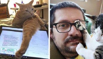 20 снимков очаровательных котят, которые вдруг выросли в мохнатого вредителя