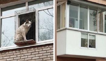 Покорители балконов: смешные фото собак на своих наблюдательных пунктах
