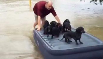 Во время наводнения, мужчина спас соседских щенков, вместо того, чтобы спасать свое имущество