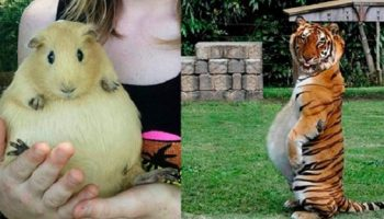 Фото самых очаровательных пушистых мамочек в ожидании потомства