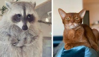 19 животных-лицедеев, которые очень красноречиво дают уроки мимики