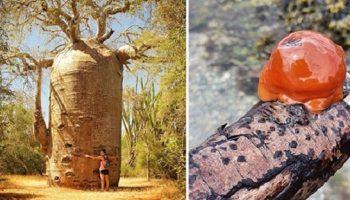 Природа не перестает нас удивлять: 19 необычных вещей