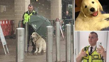 Соцсети растрогал поступок охранника, который укрыл зонтом чужого пса