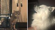 Кошка настолько сильно была привязана к своей погибшей подружке — собаке, что уже целый год ждёт ее возвращения