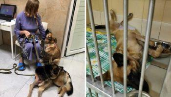 Хозяин собаки, сильно накачавшись алкоголем, выбросил ее с 4-го этажа