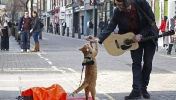 Рыжий кот Боб, изменил жизнь бездомного Джеймса