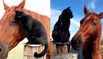 Бездомный котенок обрел не только дом, но и лучшего друга