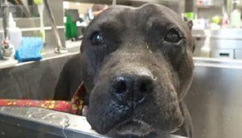 Ставшую не нужной, больную собаку, хозяева выгнали на улицу, но она не утратила доверия к людям