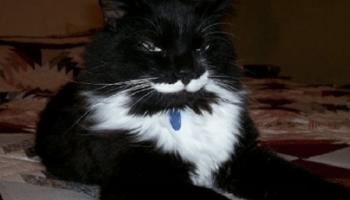 Актерская игра этих кошек-лицедеев заслужила «Оскар» и не только