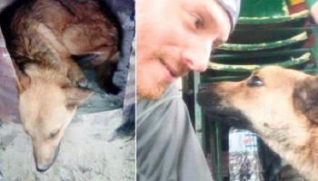 Мужчина пошел в непроходимые, чтобы спасти раненого пса