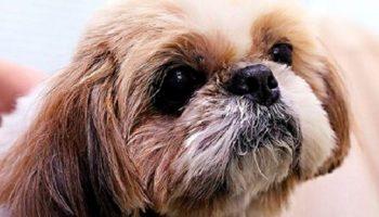 Выполняя последнюю волю хозяйки, ветеринары усыпили абсолютно здоровую собаку