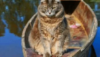 Кошка часто стала пропадать у реки, во время карантина