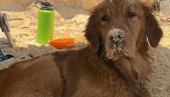 Узнав о страшном диагнозе своего любимца, хозяева пса решили организовать ему «самый лучший последний год» в жизни!