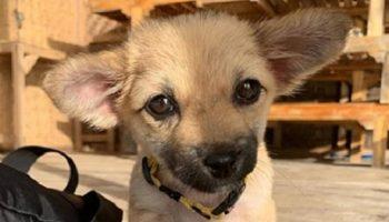 Чтобы спасти больного щенка, девушка прервала долгожданный отпуск на Бали