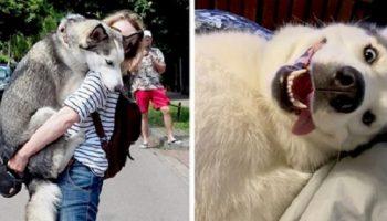 15 фото, которые доказывают тот факт, что хаски могут быть разнообразны и непредсказуемы