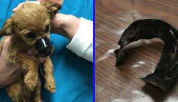 Брошенного под мостом щенка со скотчем на мордочке, совершенно случайно спас не равнодушный прохожий