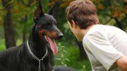 Наука дала четкие объяснения, каким образом собаки распознают «плохих» людей