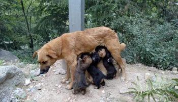 Чтобы вернуть щенкам их маму, добрый самаритянин обыскал всю округу