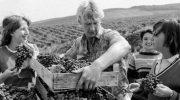 Исторические фотографии: как убирали урожай во времена СССР (17 фото)