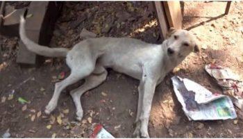 Пес, которого сбил велосипедист, лежал на обочине дороги, с отнявшимися ногами