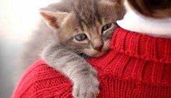 «Я в надежных руках». Трогательно и мило!